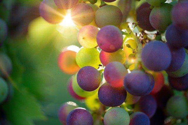 Elaboracion de un vino