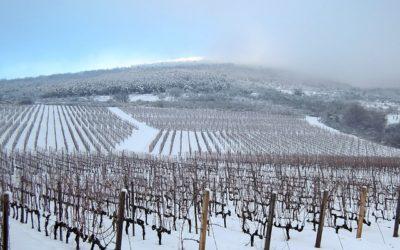 Cómo afecta la temperatura ambiente al sabor del vino